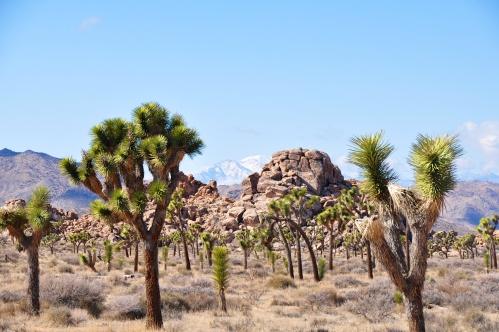 Palm Springs 17